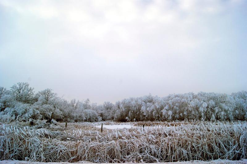 Winter Wonderland   occasionallyeggs.com