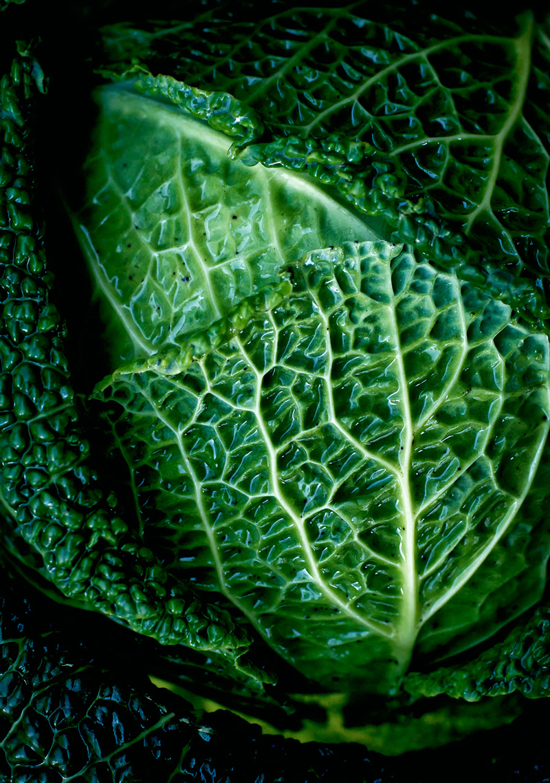 Close up of napa cabbage.