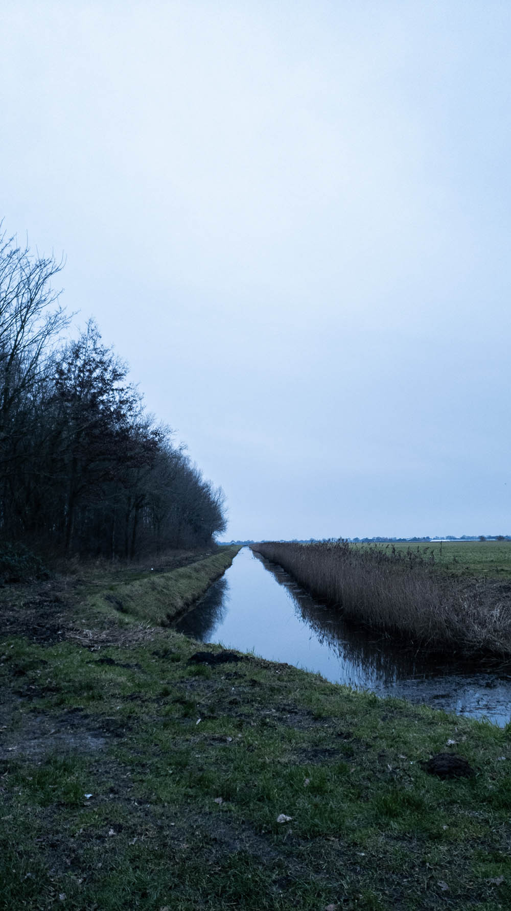 A canal in twilight, with a field on one side and trees on the other.