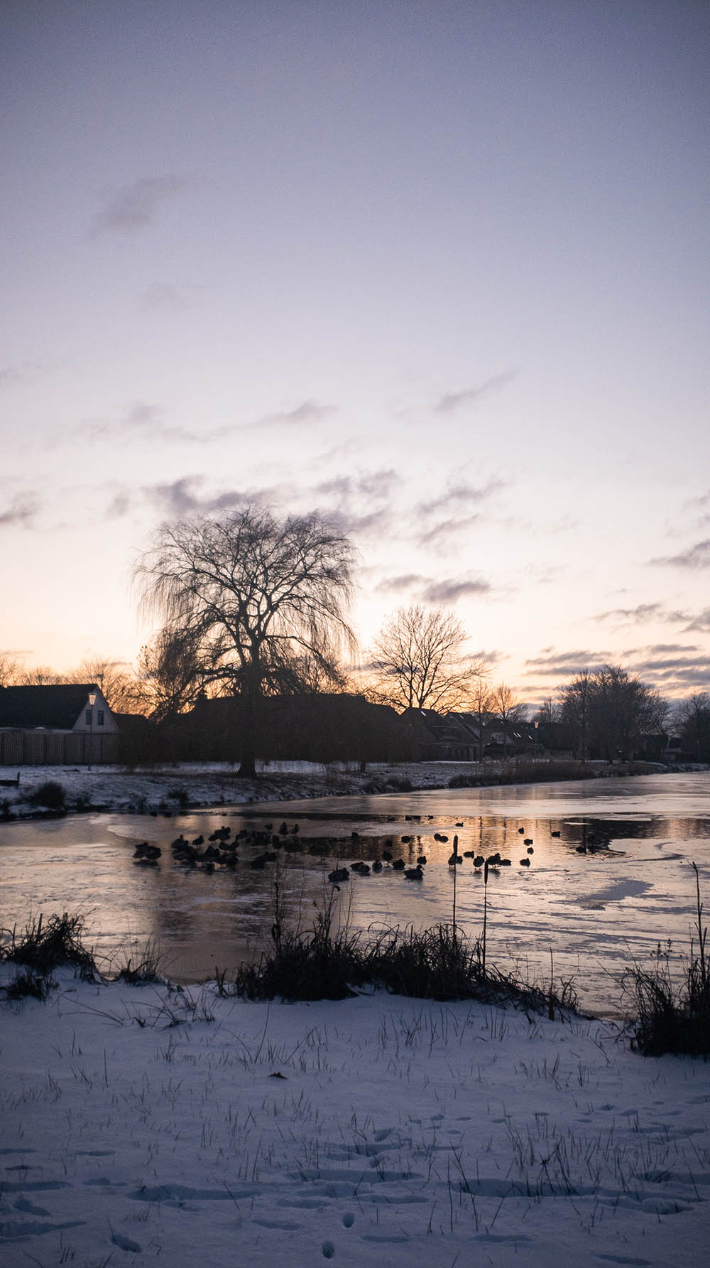 A canal, partly frozen, with water birds.