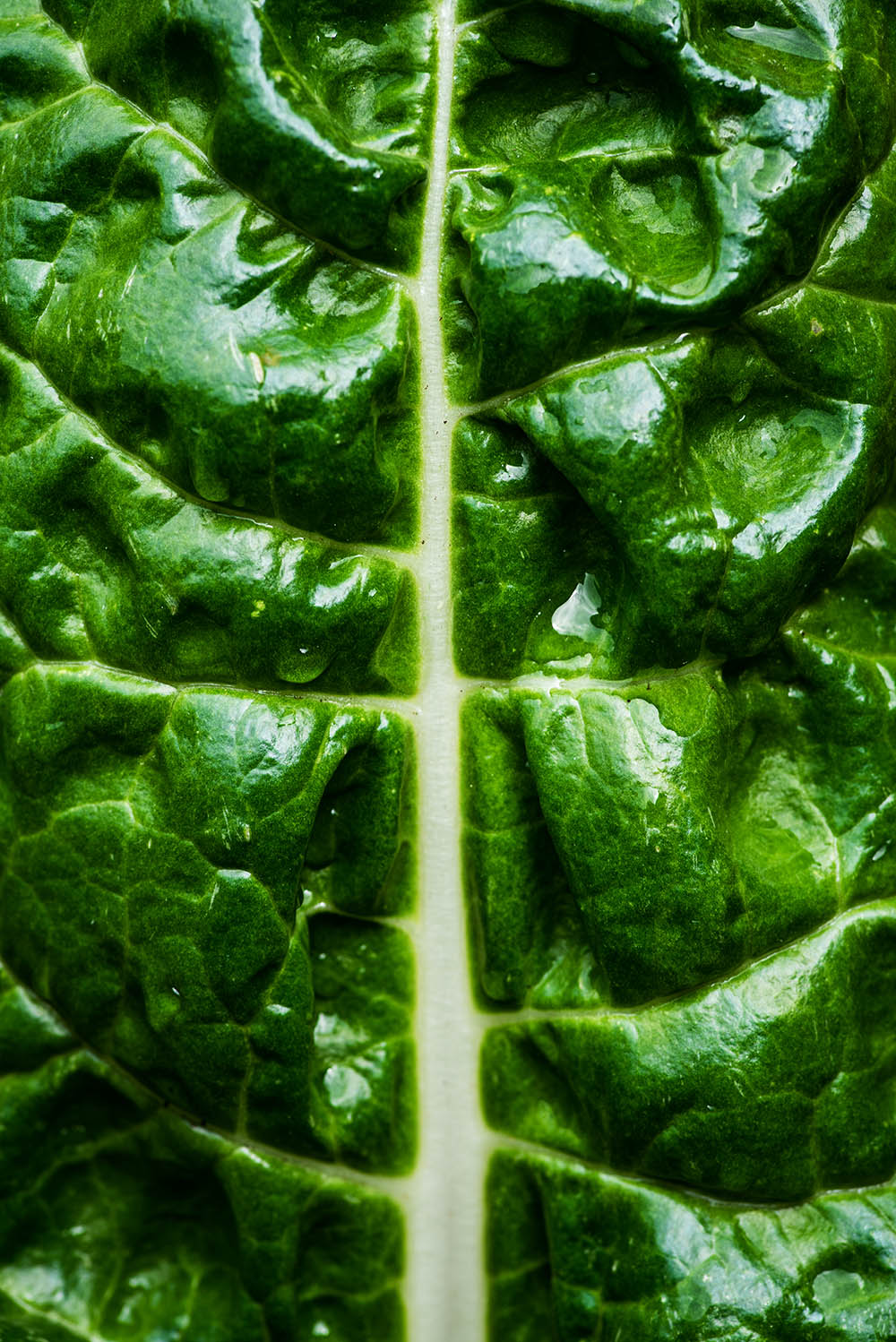 Close up of swiss chard with water droplets on it.